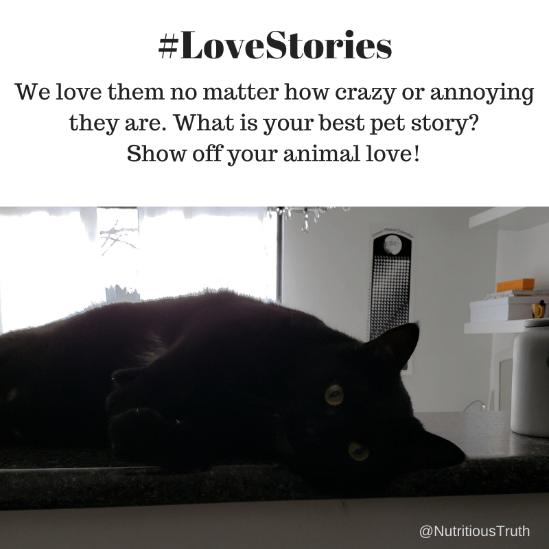 #lovestories pets